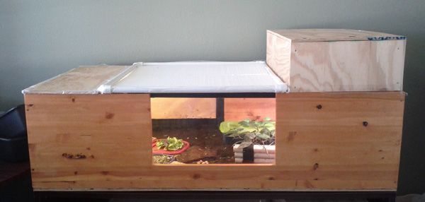 How to Build a Tortoise Enclosure